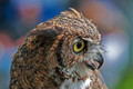 _RS33293-great-horned-owl